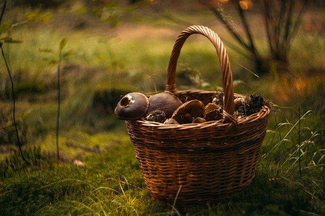 košík a houby